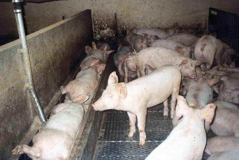 Le blog noir de l 39 agriculture - Comment construire une porcherie ...